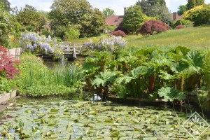 Lily pond at Wisley Gardens.