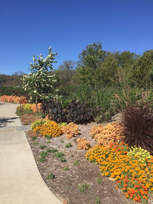 Profusion zinnias along a walkway in the children's garden.
