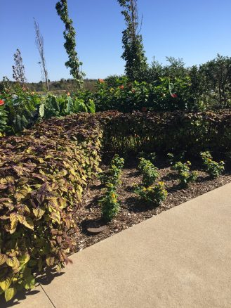 More coleus used as hedging in the floral terraces.