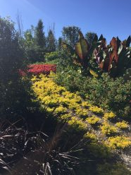 Banana trees, golden duranta, coleus and other plants add texture and visual interest.