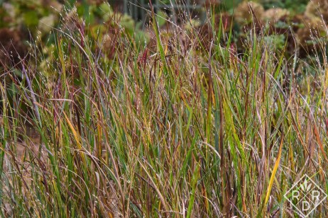 'Heavy Metal' in the lower garden starting to turn bronze for winter.