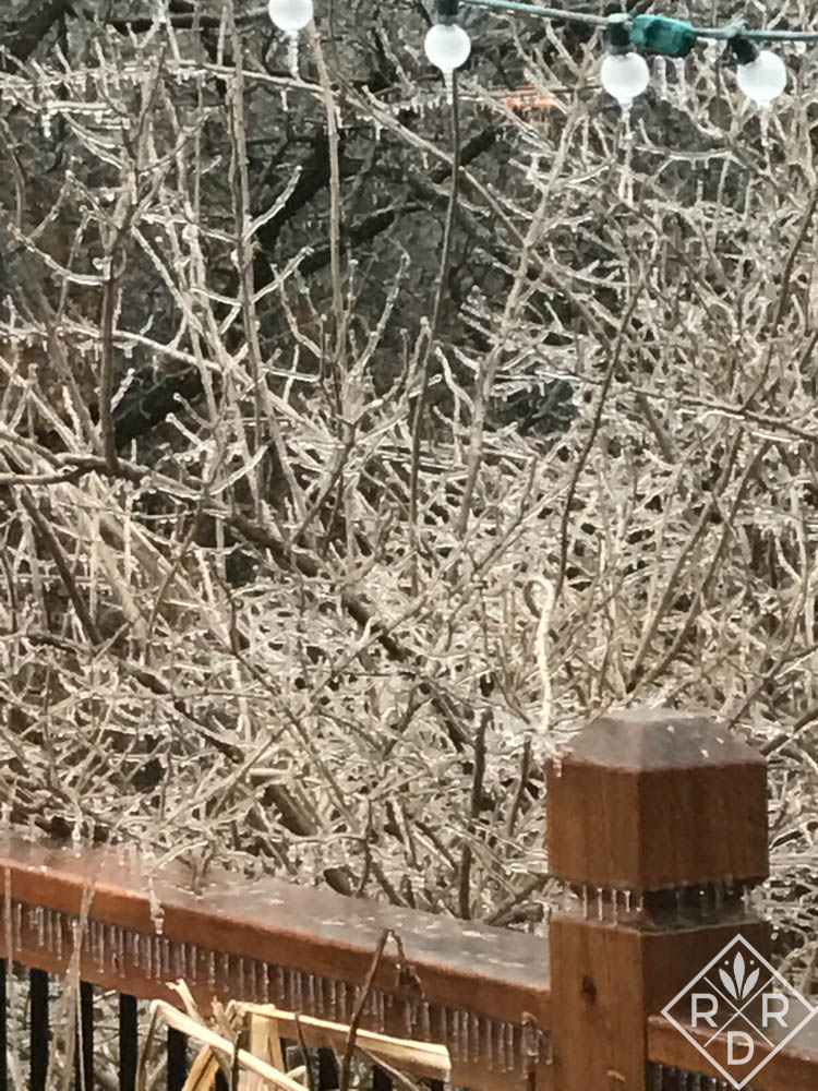 Ice storms are beautiful, but hard on plants and people.