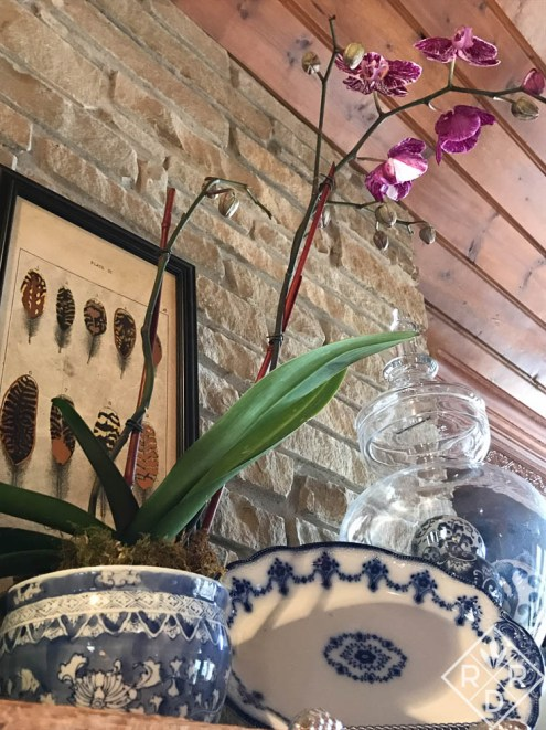 Mantel with purple orchid and blue and white dishes. I feed the orchids every other week while blooming. They bloom for nearly four months. I'll put them in the bathroom too afterward.