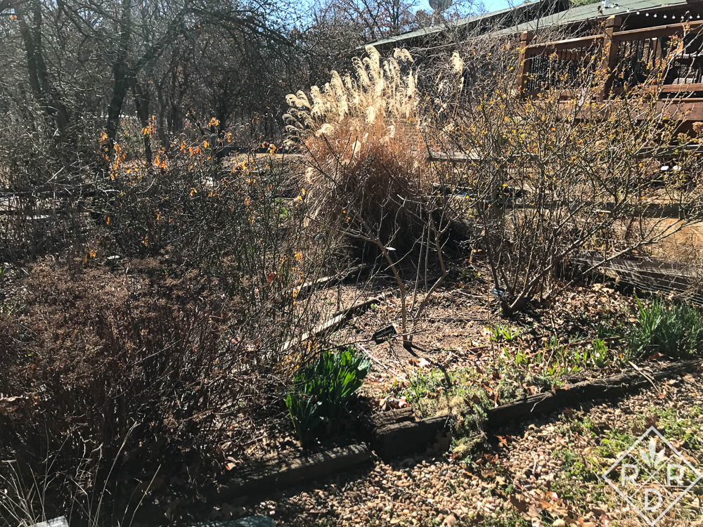 Ornamental grasses only need care at the beginning of spring. Cut them back and wait for the show to begin. February garden chores.