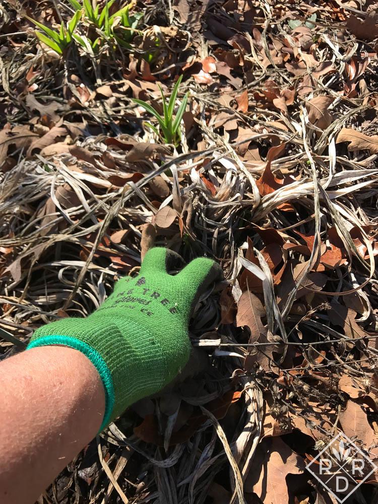 February garden chores: bit by bit