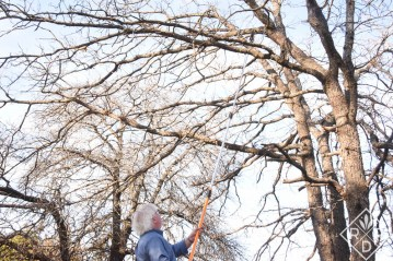 Bill Nash showing how far the Fiskars 7-16 Foot Chain-drive Extendable Pole Saw and Tree Pruner extends.