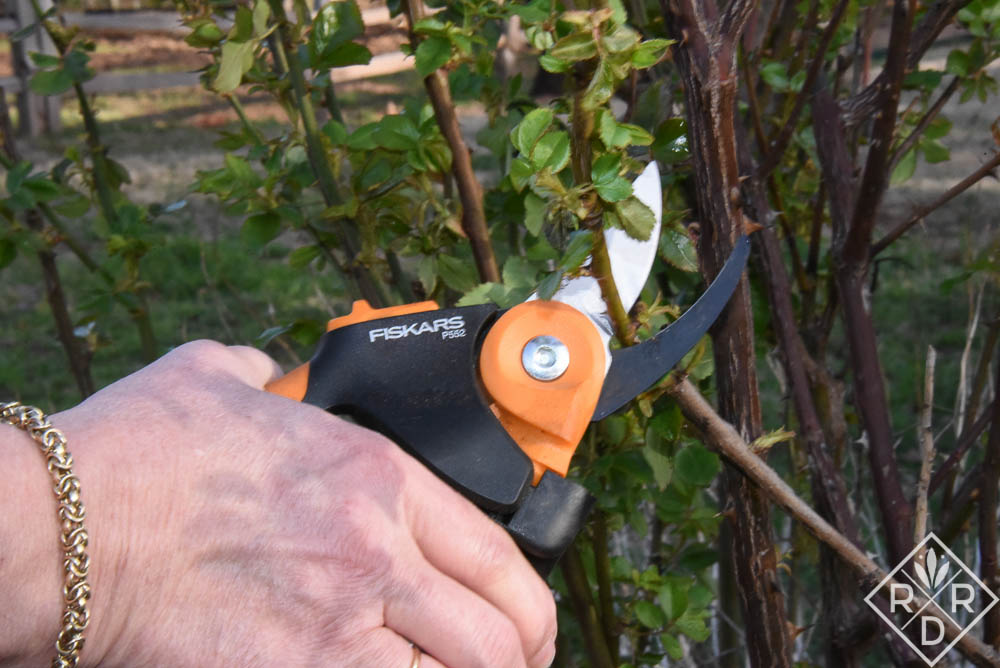 Dee Nash pruning a rose with Fiskars PowerGear2 Softgrip Pruner; Fiskars Garden Tool Giveaway