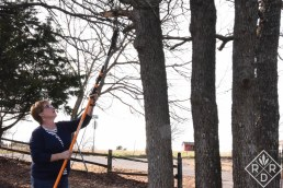 Reaching for a tall limb with the Fiskars 7-16 Foot Chain-drive Extendable Pole Saw and Tree Pruner