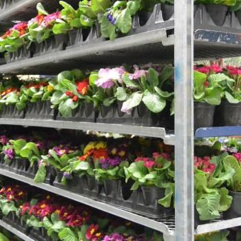 Plant rack at Northwest Flower and Garden Show.