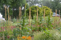 Bamboo pole teepees in the cutting garden keep vines tidy in the cutting garden.