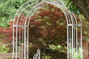 """Acer palmatum var. dissectum 'Tamukeyma,' is named after Mt. Tamukeyama in Japan. According to the Bower & Branch website, a tamuke is a """"spiritual offering."""" All gardens are spiritual offerings in my opinion."""