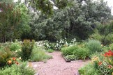 Back garden from the side as I come in the white arbor. The 'Annabelle' hydrangeas are at the end.
