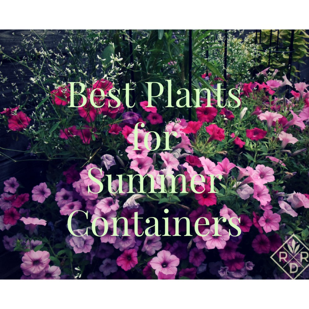 Best plants for summer containers