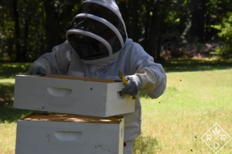 Placing the super on top of the hive body. You do it at an angle to keep from squishing bees.