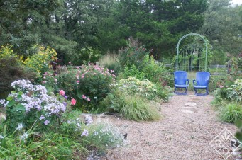 Grasses and other plants in my garden midsummer of 2013. It looks similar now, but the chairs are painted purple.