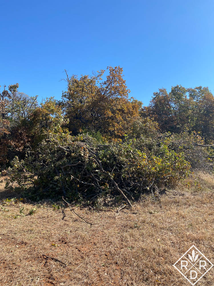 Part of the brush pile in the meadow. Photos don't do it justice.