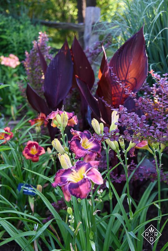 Daylilies in the open garden, garden tour