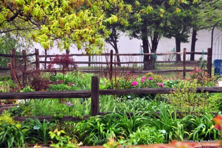 garden-in-the-rain-4-28-2009-11-49-48-pm