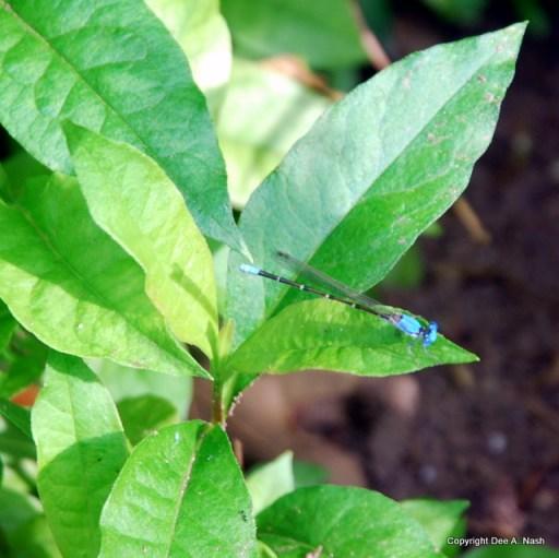 Pretty blue bug
