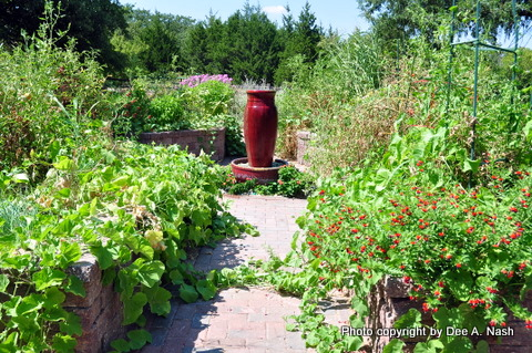 Potager in late summer with sweet potato vine and tomatoes. Dee Nash--Red Dirt Ramblings
