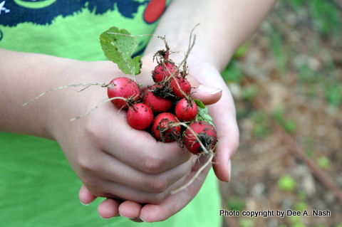 My youngest daughter holding radishes