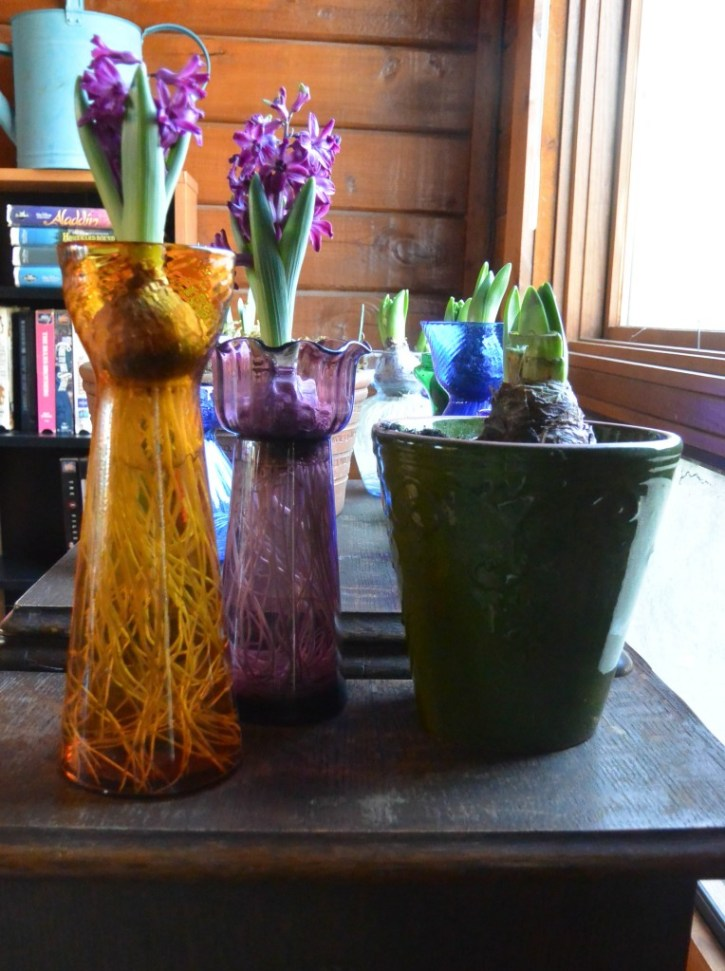 Hyacinth vases and amaryllis in a pot.