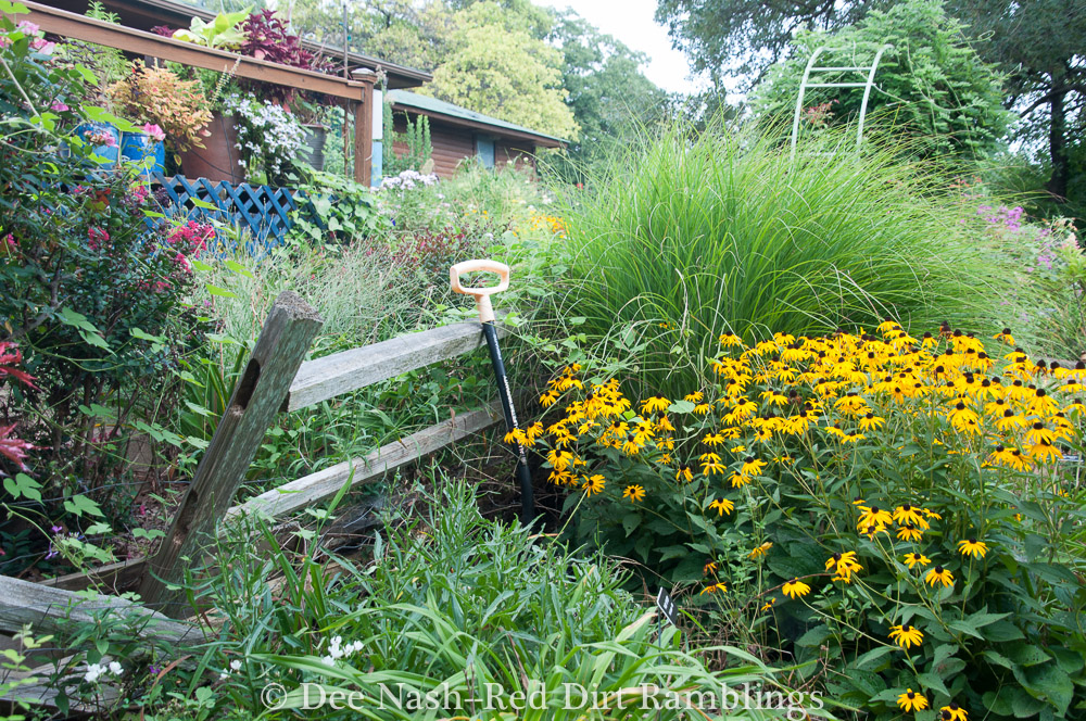The garden is chaos in summer and shrinking in on itself, but with a few tidying chores, I can make a beautiful September.