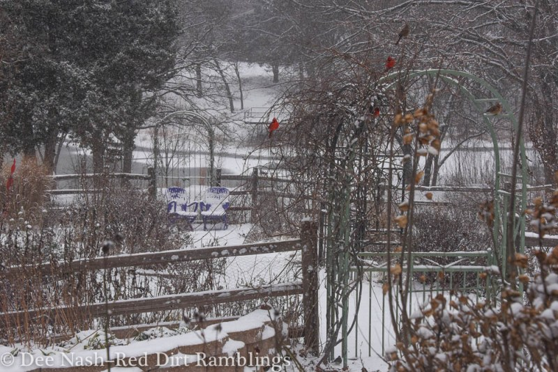 The back garden's main path and two of the arbors in the snow.