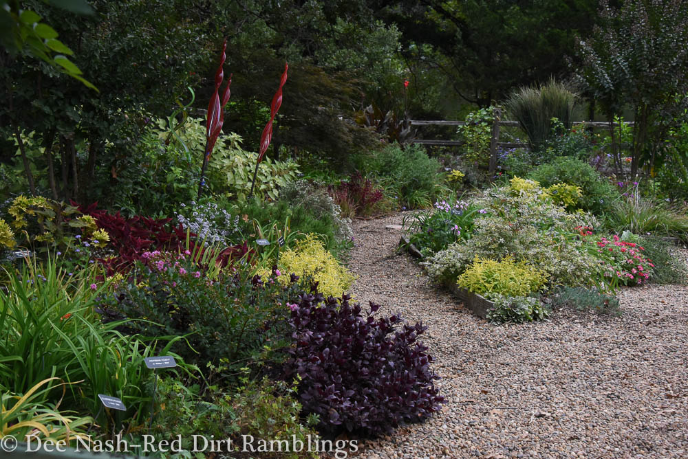 Back garden in October with Purple Knight alternanthera and other beautiful foliage plants. Dee Nash