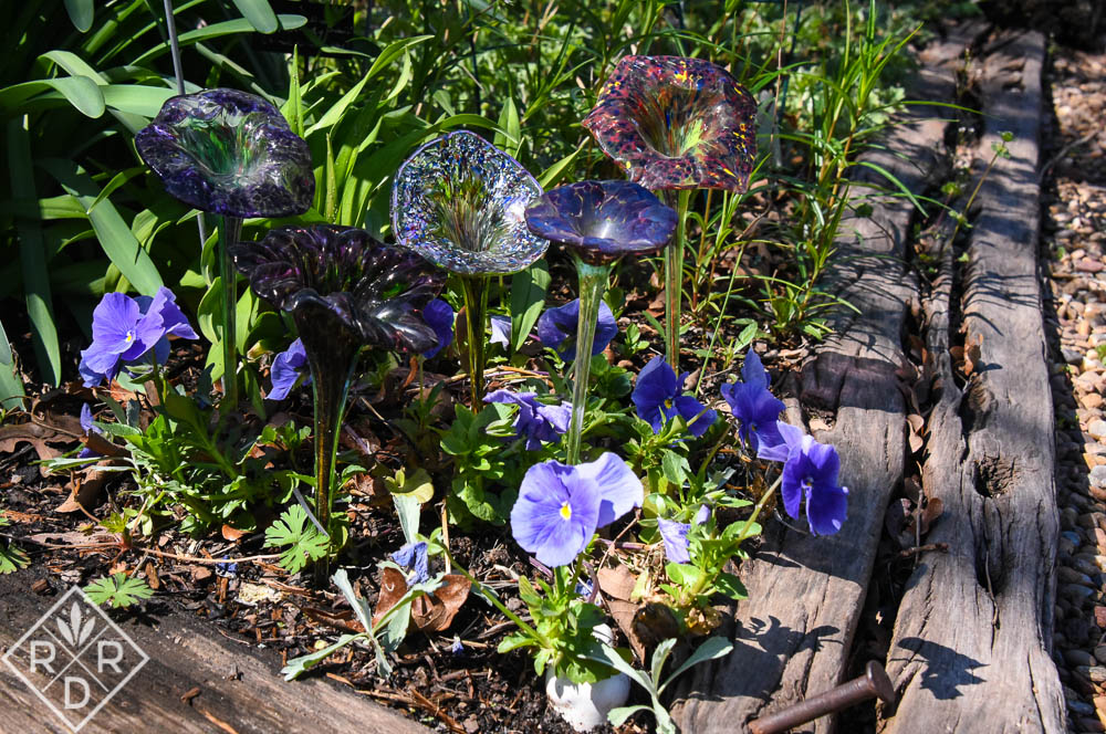 Bright blue pansies beneath blown glass lilies shrugged off the freezes.