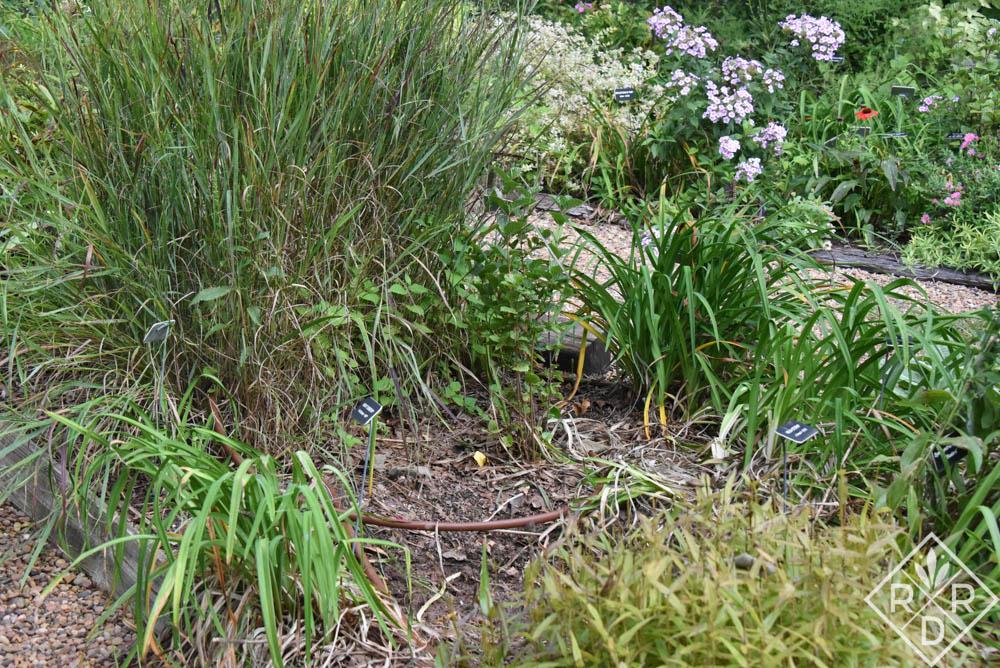 Hole left by 'Little Joe' Joe pye weed. I'll put daylilies and maybe a 'Baby Joe' Joe pye weed here.