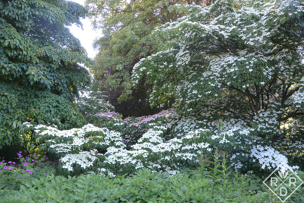 Part of Newby Hall's National Cornus Collection.