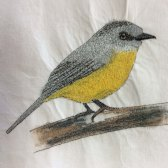 Sue's Eastern Yellow Robin