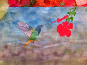 Ryl's gorgeous humming bird