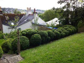 box hedge design