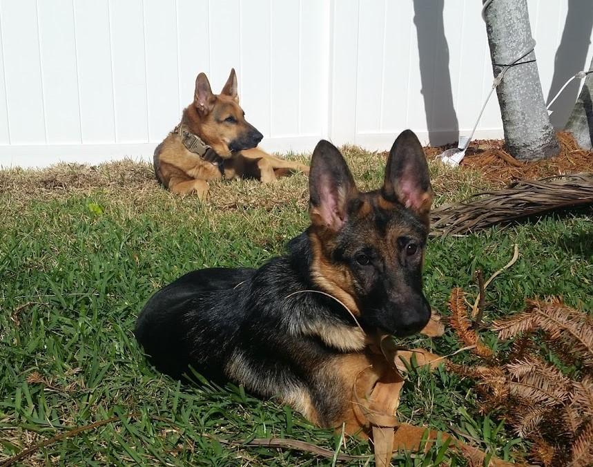Transplant Shock! (or why my tree croaked) - Dog Training