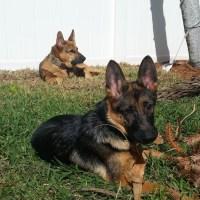 puppy-dog-training-dfw