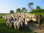 Matthew 25:31-46 – The Sheep and the Goats