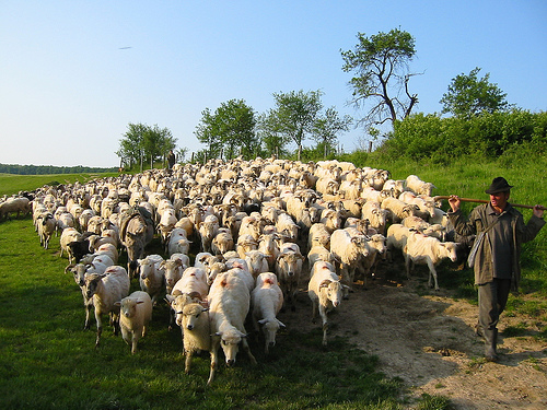 Matthew 25 The Parable of the Sheep and the Goats