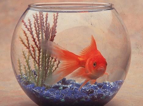 fish and nephesh Genesis 1:20