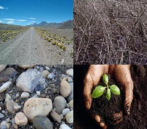 the parable of the four soils Luke 8