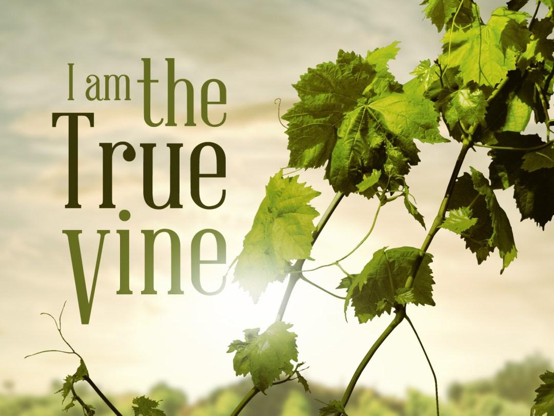 John 15 true vine