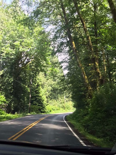 Street & Trees
