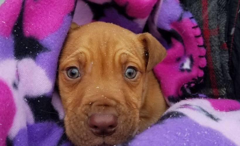 detroit puppy