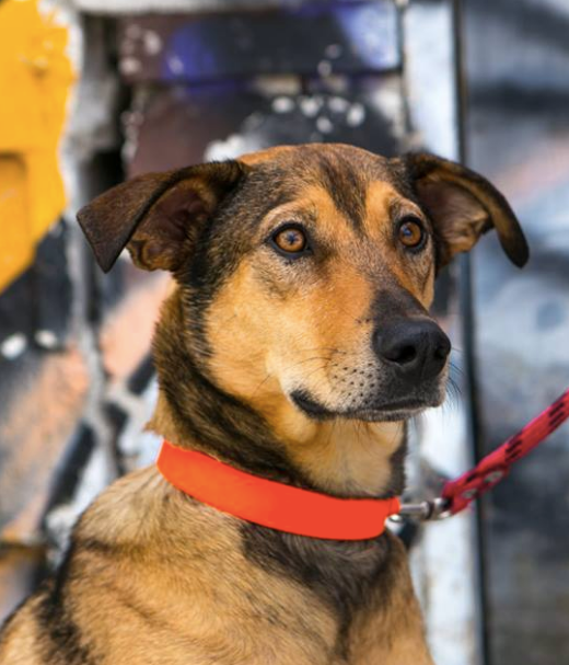 rescue dogs, coffee
