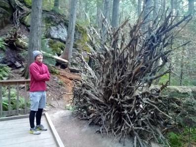 Trail of Cedars!