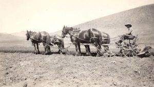 Herb Swan Plowing, early 1900s