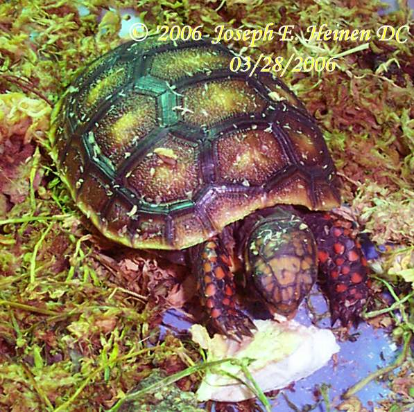 hatchling and juvenile care