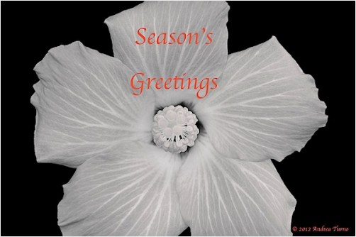 2012 season's greetings
