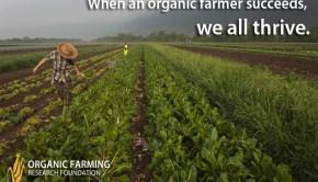 organic_JBG_fields